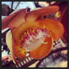 Fleur grotesque